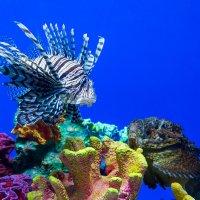 Опасные обитатели моря :: Олег Марков