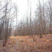 в осеннем лесу :: Yasnji
