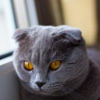 Scottish eyes :: Nika Nitkina