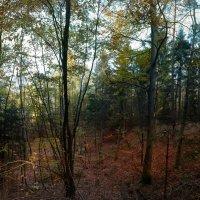 В лесу :: Johann Lorenz