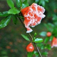 красота мелочей. :: Irina Rooney
