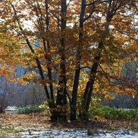 Первый снег :: Valeriy(Валерий) Сергиенко