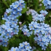 Любимые цветы :: Svetlana27
