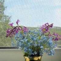 Лето на окне. :: nadyasilyuk Вознюк
