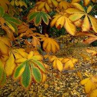Последние листья осени... :: Ирина