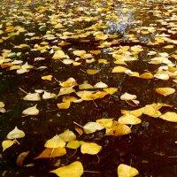 Прощание с осенью.... :: Ирина