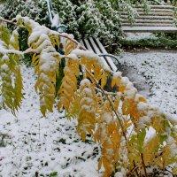 Первый снег в сентябре :: Галина