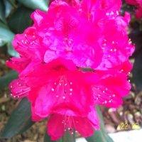 цветы :: Алексей Мастев