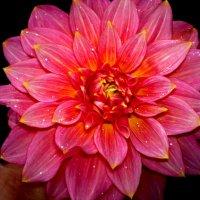 цветок :: Алексей Мастев