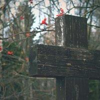 Рябинушка могильная :: Дмитрий Балтухин