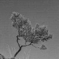 Просто дерево :: Олег Сафонов