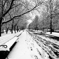 Вдруг выпал снег. :: Александр Бродский