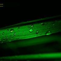 Трава после дождя :: Серега Иванов