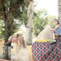 Ник покатался  на верблюде, я б не осмелилась )) :: Татьяна Гулевич-Хациева