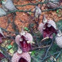 Ботанический сад :: Наталья