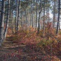 Осенние краски :: Игорь Кузьмин