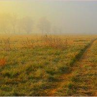 Дорога в туман :: Svetlana Kravchenko