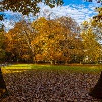 Осень за кулисами :: Alexander Andronik
