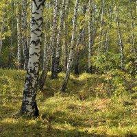 Осенний лес :: Дмитрий Конев