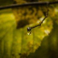 После дождя :: Мохнатыч Борода