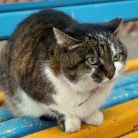 А у нас во дворе есть котейка одна! :: Elena Izotova