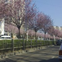 весенний город :: Елена Константиниди