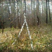 Осенние скульптуры леса :: Ольга Кривых
