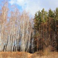 Осень,Климовск :: Владимир Холодницкий