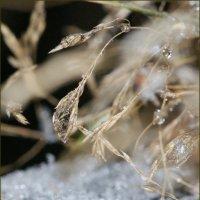 Ледяная капля. :: Лилия Гудкова