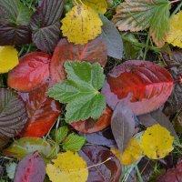 Осенний фейерверк :: Вера Андреева