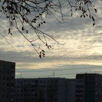 Вечернее небо в ноябре... :: Тамара (st.tamara)