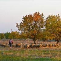 пастух :: Алексей Новик