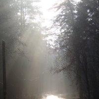 Дорога в туман :: Андрей Снегерёв