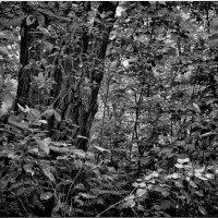 В чаще леса :: Сергей Бережко