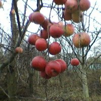 Осень в саду :: Миша Любчик
