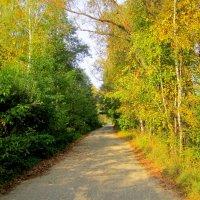 Осенняя дорога :: Катя Бокова