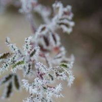 Зима стучится в двери 2 :: Наталья Макарова
