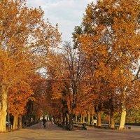 осень на Приморском бульваре :: Александр Корчемный