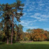 Сосны в парке :: Alexander Andronik