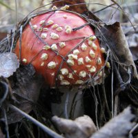 Про грибы... :: Михаил Болдырев