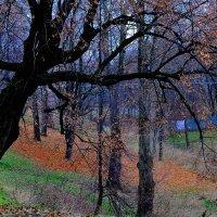 Осень. :: Leonid Volodko