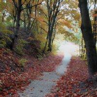 Осенний пезаж :: Dmitry Swanson