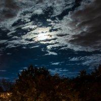 лунная ночь :: Katerina Tighineanu