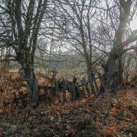 слияние природы и строений человека :: Игорь Чичиль