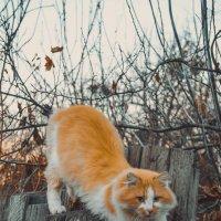 КотЭ :: top cat