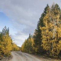 дороги лесные :: Владимир Иванов