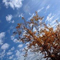 Осеннее небо. :: Владимир Незабываемый