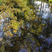 Листья над водой :: Valerii Ivanov