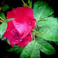 Царевна цветов :: Александр Резуненко