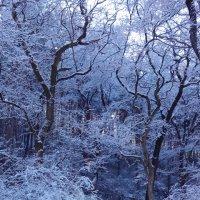 Холодная красота :: Kristina Shatlova